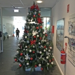 designer-christmas-christmas-tree-hire-perth-4_0